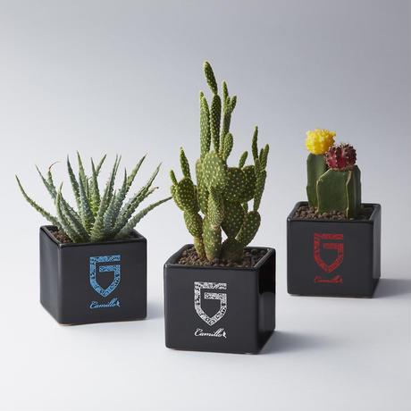 GARNI×CAMILLO Cube Pot - L