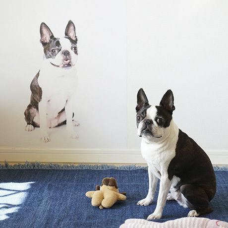 愛犬ウォールステッカー・L(A1サイズ)