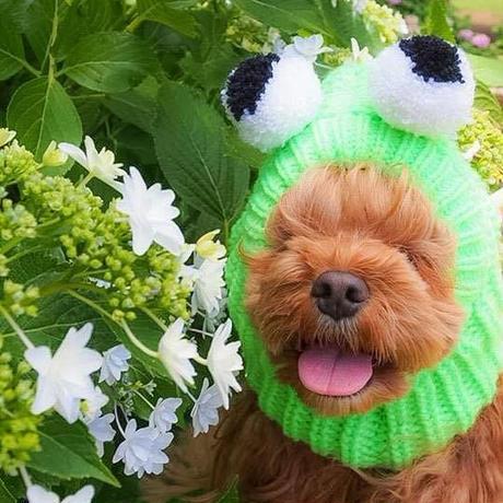 犬のコスチューム(カエルちゃん)