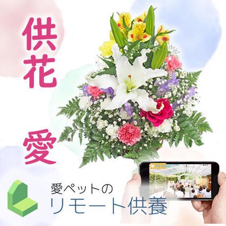 【供花・愛】リモート供養お受付  【3名様以上オススメ】