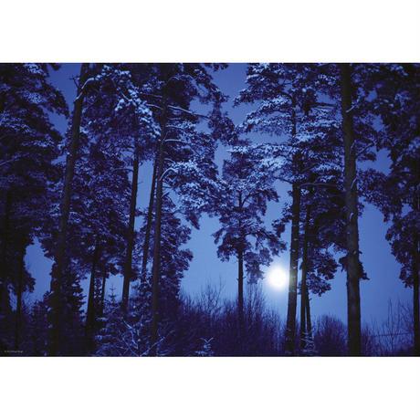 29625  Magic Forests : Full Moon