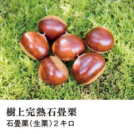 【予約受付中】樹上完熟石畳栗(生栗)2キロ
