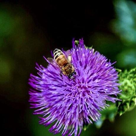 【安心のサイズで蜂蜜生活を】石垣島はちみつ 500gソフトボトル