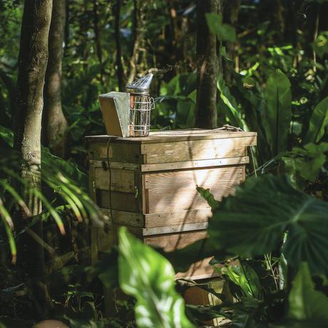 【お徳用サイズで蜂蜜生活を】石垣島はちみつ1kgトンガリキャップボトル