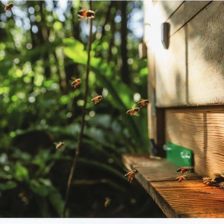 """【天然成分とアロマの香りを】みつばちローション """"花"""" さっぱりタイプ詰替用500ml"""