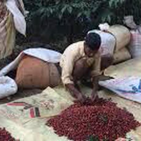 インド SeLection 33  ウォッシュド 【浅煎り】ご家庭用お得サイズ 豆or粉 250g