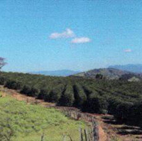 ブラジル カルモデミナス サンタリタ デ カッシア農園 【深煎り】ドリップバッグ5個入り
