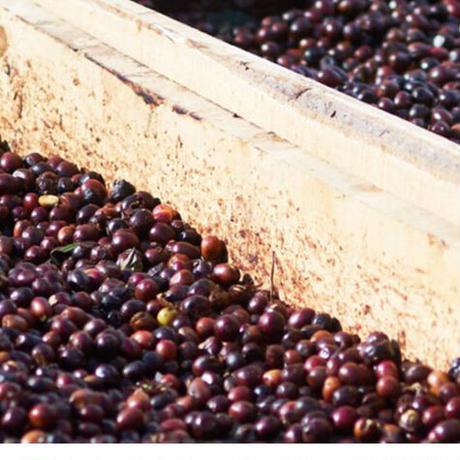 エルサルバドル エル・ゴビアード農園 ナチュラル【中煎り】 豆 or 粉 100g