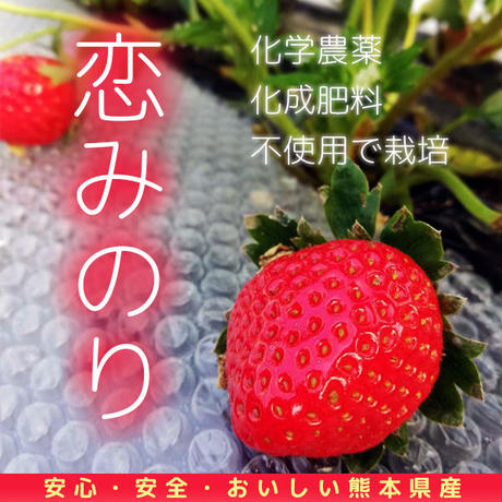 送料無料 有機イチゴ2パック入り 恋みのり 熊本県産
