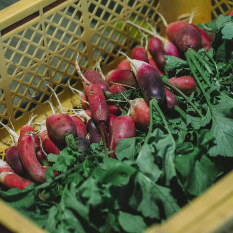 八風農園の野菜セットボックス通販 / 風「Kaze-BOX」