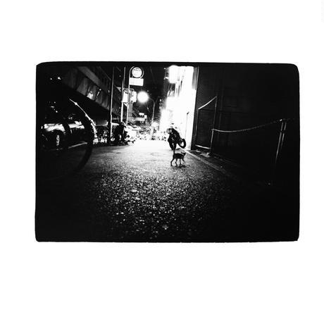 金森玲奈 写真集『街猫の肖像』新品 サイン入り