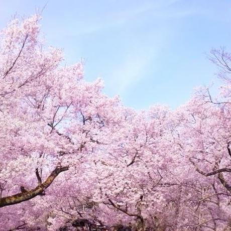 癒しの花畑とフルーツ狩り(案内料金)