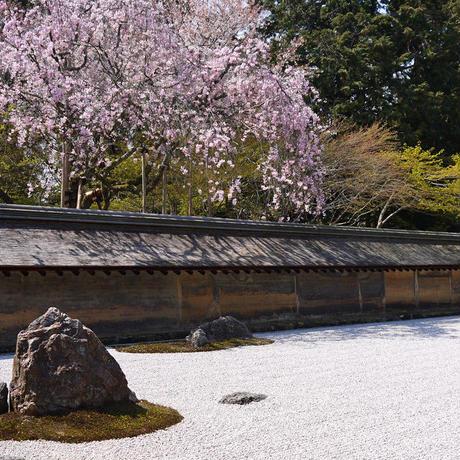 京都 非公開寺院で人のいない時間に見学しよう(案内料金)