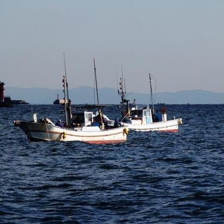 イカ、カレイなどの漁師体験(案内料金)