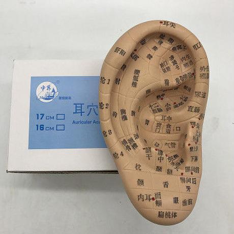 耳穴模型(17cm)*現物在庫あり