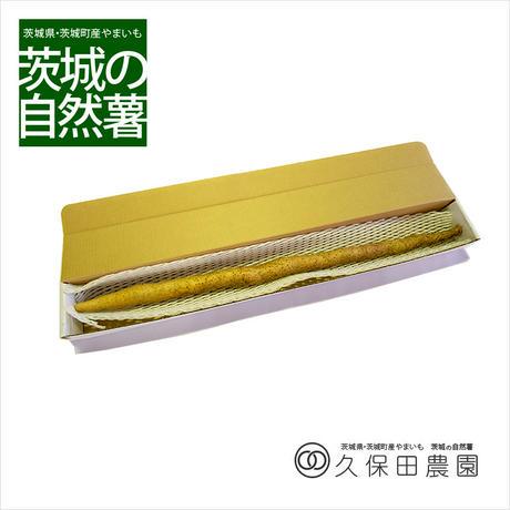 茨城の自然薯 1本 (約750g/85cm) 短箱