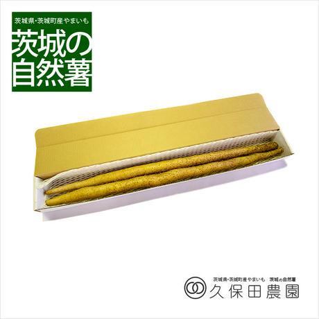 茨城の自然薯 2本 (約1.5kg/85cm) 短箱