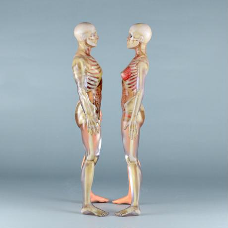 """【9"""" 】立ちポーズ 裸体&骨格と器官 ハーフ人体模型 22.9 cm"""