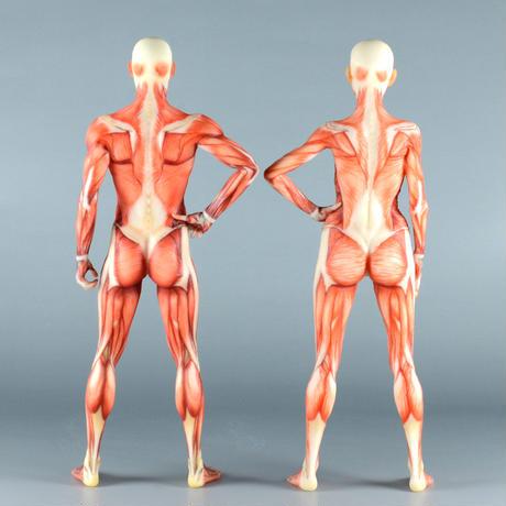 """【7"""" 】立ちポーズ 筋肉人体模型 17.8 cm"""