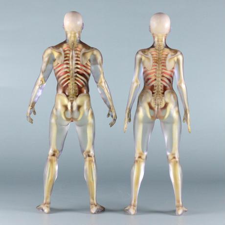 """【7"""" 】立ちポーズ 骨格と器官人体模型 17.8 cm"""