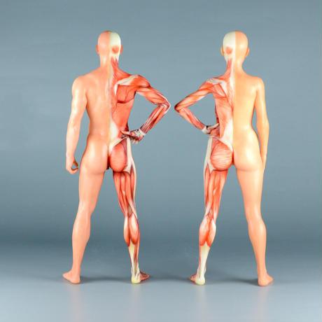 """【7"""" 】立ちポーズ 裸体&筋肉 ハーフ人体模型 17.8 cm"""