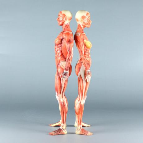 """【5"""" 】立ちポーズ 筋肉人体模型 12.7cm"""