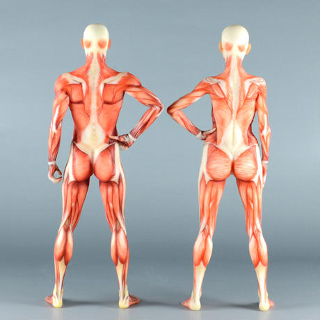 """【12"""" 】立ちポーズ 筋肉学人体模型 30.5 cm"""