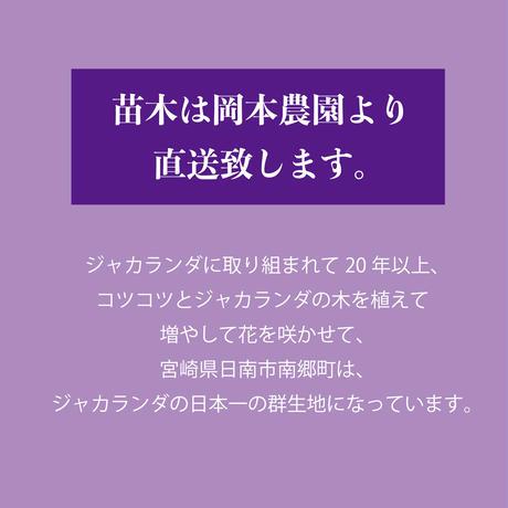 【花・花芽なし】バイオレットブルー
