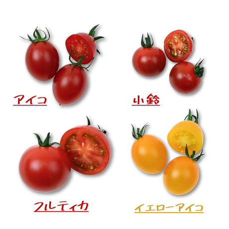 【送料無料】とまおとめ® 食べ比べ 2kg(1kg箱 × 2セット)