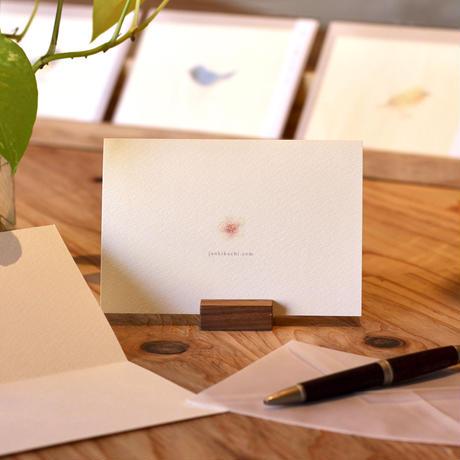 小鳥のカード「ウソ 」