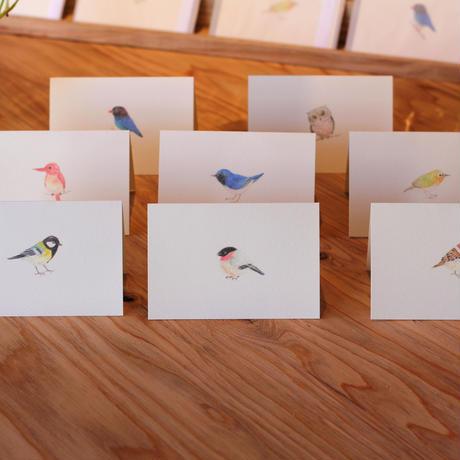 小鳥のカード「メジロ 」