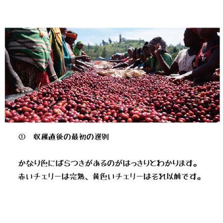 【100g】エチオピア グジ シャキーソ ナチュラル TADE GG農園  JAS認証 (中煎り)