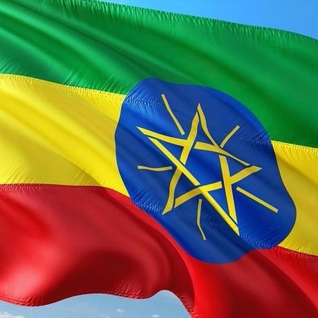 【100g】エチオピア グジ シャキーソ ウォッシュド TADE GG農園 JAS認証 (中煎り)