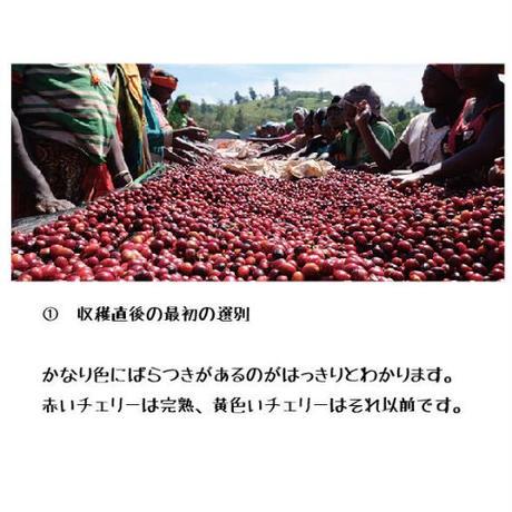 【200g】エチオピア グジ シャキーソ ハニー TADE GG農園 JAS認証 (中煎り)