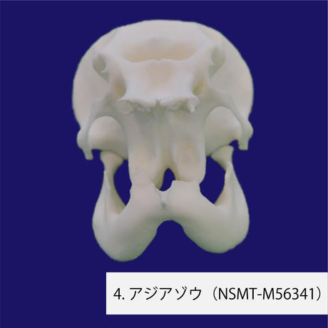 3Dプリントレプリカ10種セット