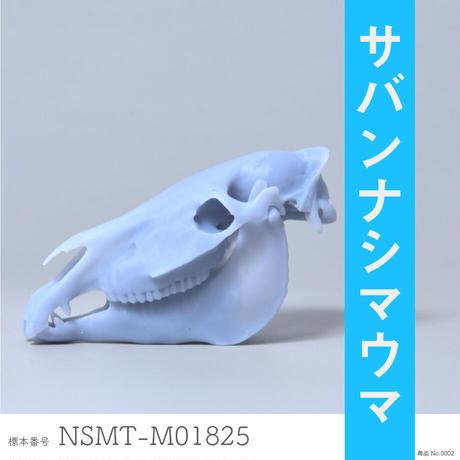 国立科学博物館のシマウマ NSMT-M01825