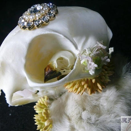 ネコの頭骨ヘッドドレス A