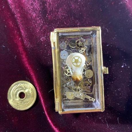 硝子の標本箱ブローチ(フィンチ)