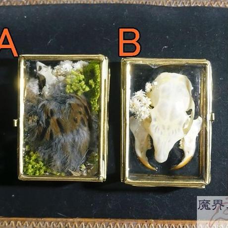 硝子標本箱の剥製ブローチ(中)