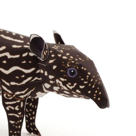 仔マレーバク :Malayan Tapir Cub(紙工作キット)