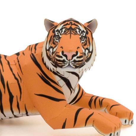 スマトラトラ:Sumatran Tiger      (紙工作キット)