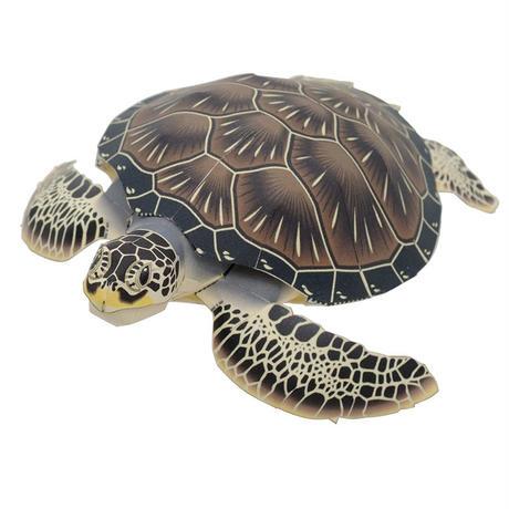 アオウミガメ:Green turtle(紙工作キット)