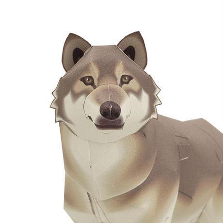 タイリクオオカミ:Grey Wolf(紙工作キット)