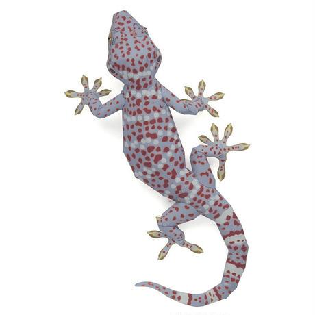 トッケイヤモリ:Tokay Gecko    (紙工作キット)