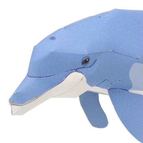 ハンドウイルカ:Bottlenose Dolphin(紙工作キット)