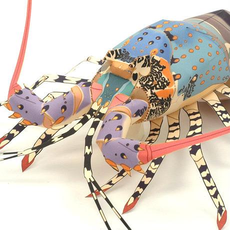 ニシキエビ:Tropical spiny lobster(紙工作キット)