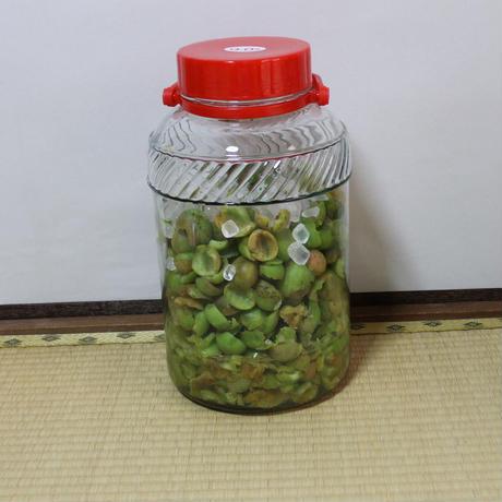 青梅の甘酢漬け、カリカリ梅 ※販売終了