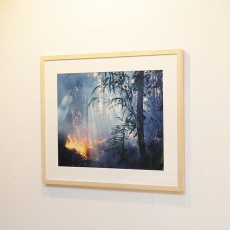 火天 - Ignite Forest -