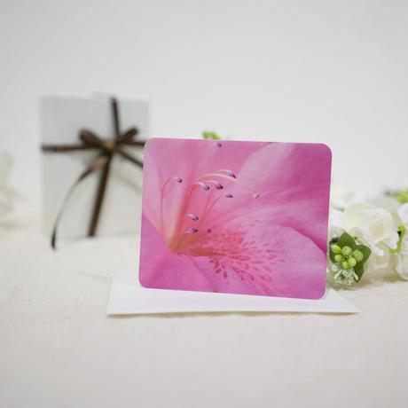 メッセージカード「マルバサツキ」