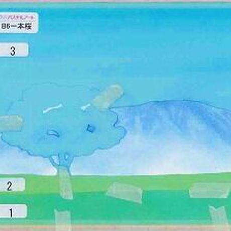 B6【一本桜】